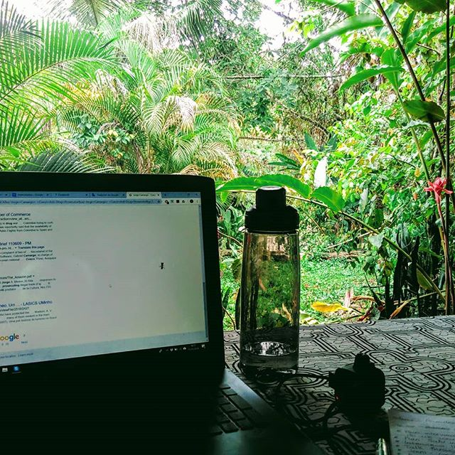 Very happy with the new office space and who knew chickens would make such entertaining coworkers! 💻🌴🐔 With two out of three teammates now in the jungle, we're getting stuck into logistics planning ... tbh, the chickens are not pulling their weight.  #pioneerswithpurpose #voicesontheroad