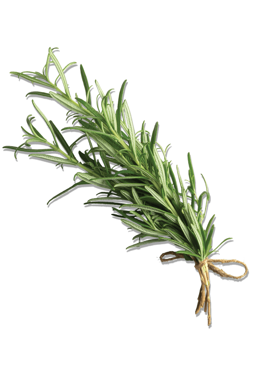 rosemary object.png
