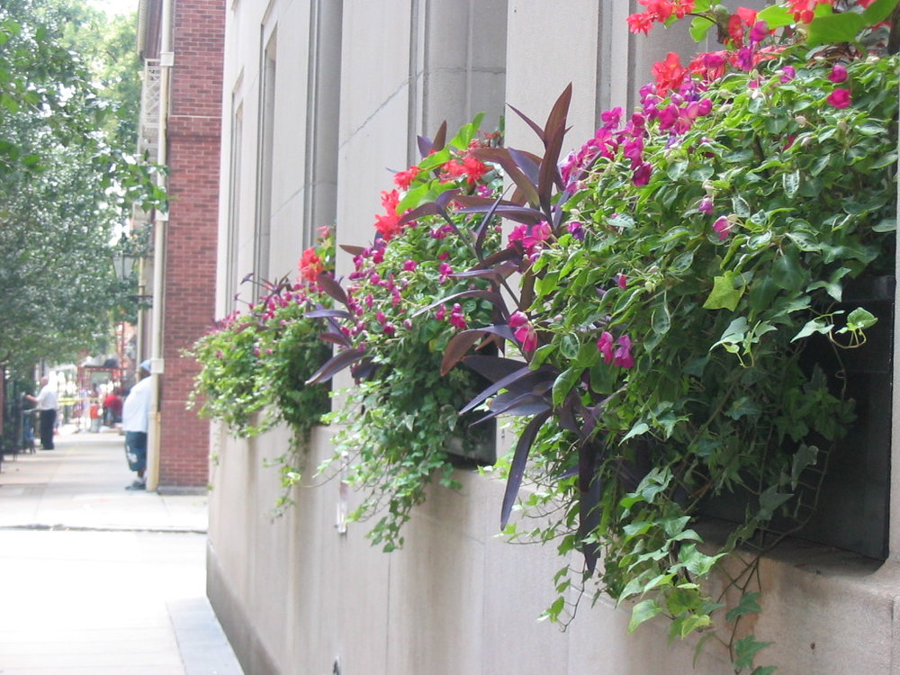 Flower Boxes   We service clients in center city Philadelphia (as well as the surrounding neighborhoods) four times a year for seasonal flower box plantings. We are also happy to install flower boxes for clients for an appropriate fee.