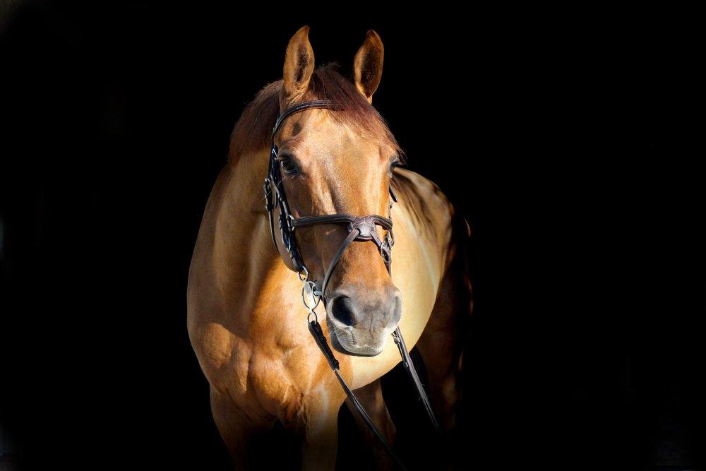 Horse Riding -
