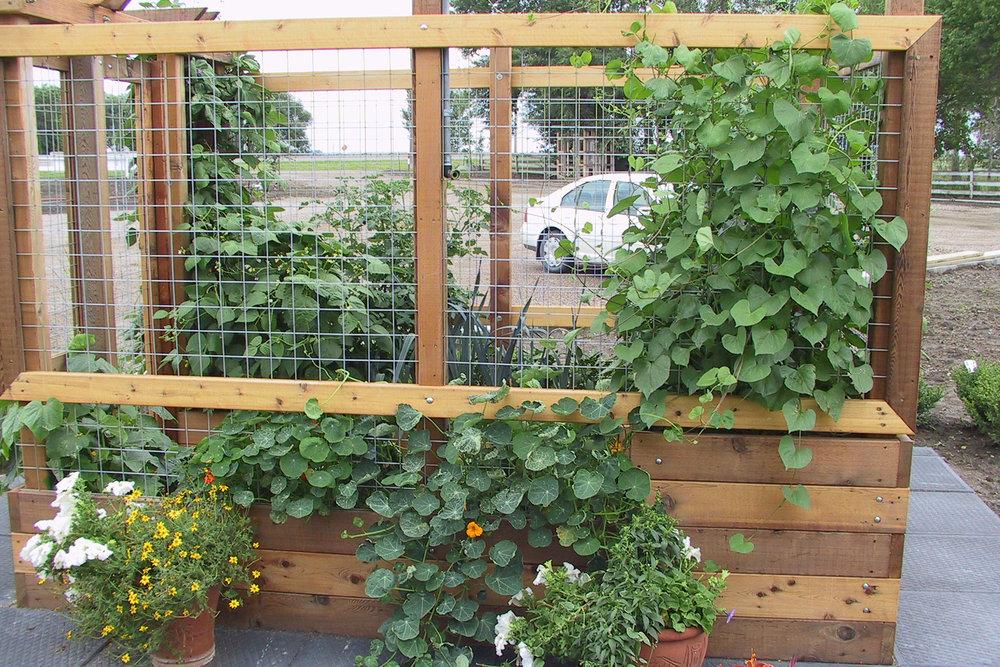 raised-planter-3.jpg