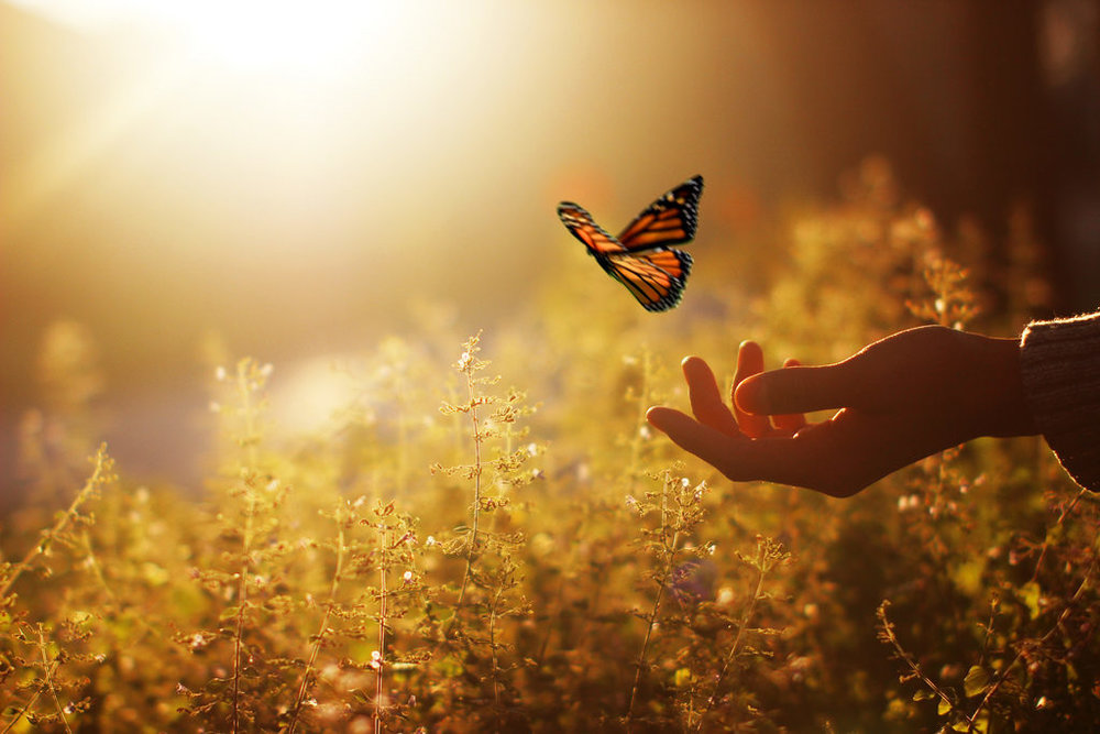 Butterfly-1024x683.jpg