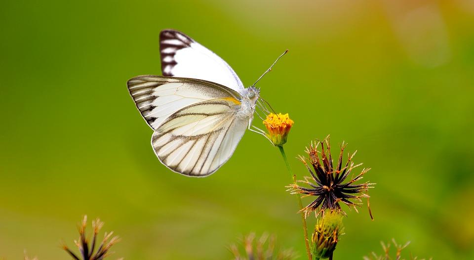 butterfly-1964621_960_720.jpg