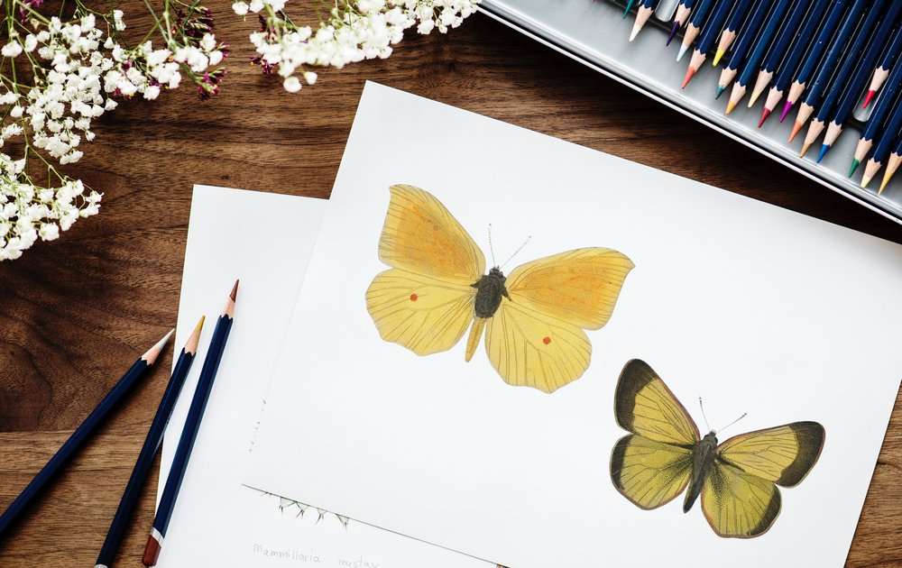 art-butterflies-coloring-920118.jpg