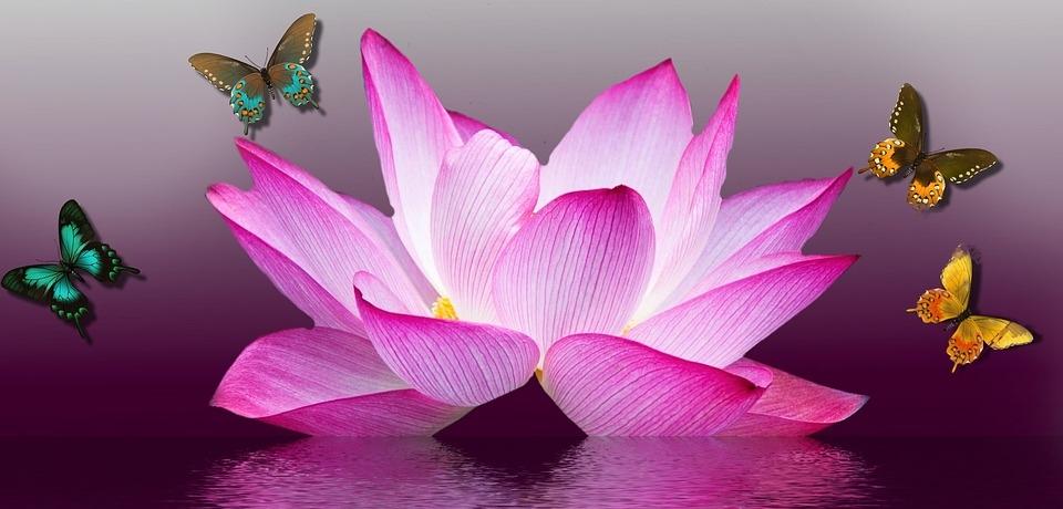butterfly-1164493_960_720.jpg