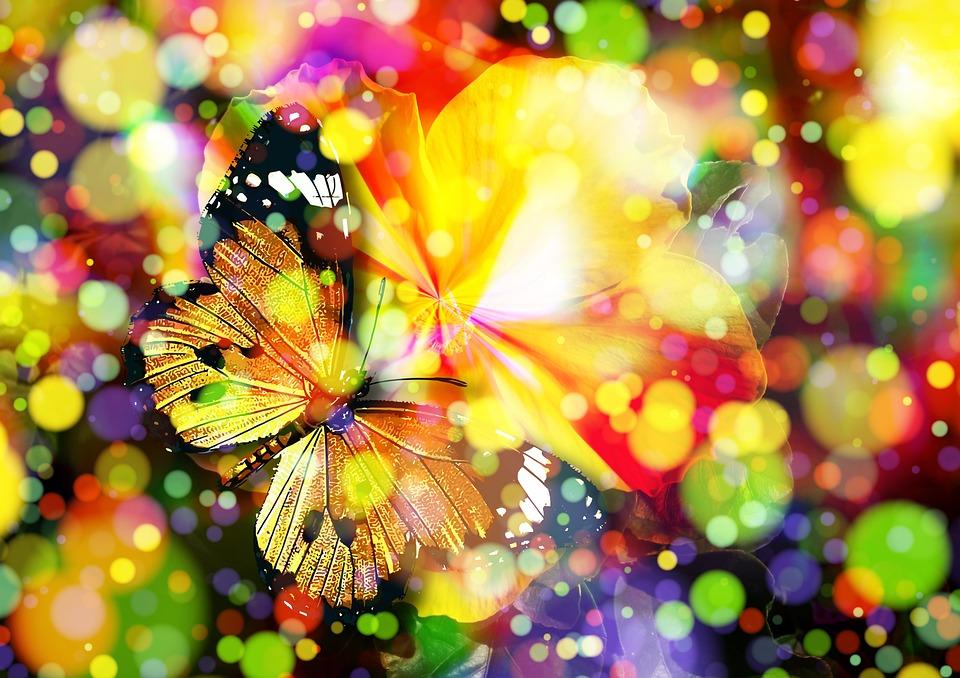 butterfly-407746_960_720.jpg