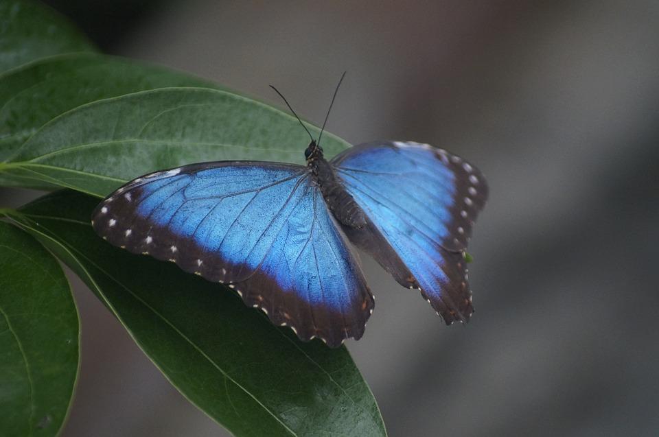 butterfly-2851625_960_720.jpg