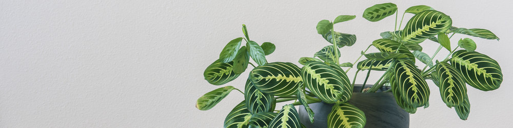 About Us - Bringing the Beauty of Nature Indoors