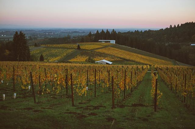 Autumn in wine country is some sort of spiritual place. If you haven't been out to the Willamette Valley, I recommend it wholeheartedly. Dm me for recommendations on where to go and what to taste - though you really can't go wrong 😘