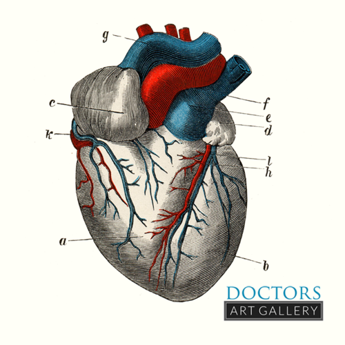 Heart Anatomy Vintage Medical Illustration — Doctors Art Gallery