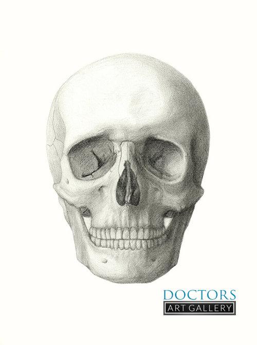 Skull Anatomy Graphite Drawing Print — Doctors Art Gallery