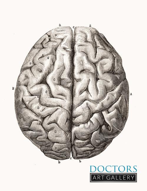 Brain Anatomy Superior View Vintage Art Medical Illustration ...