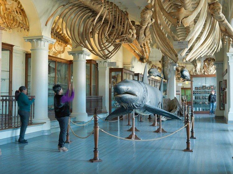 Naturhistorisk museum.jpg
