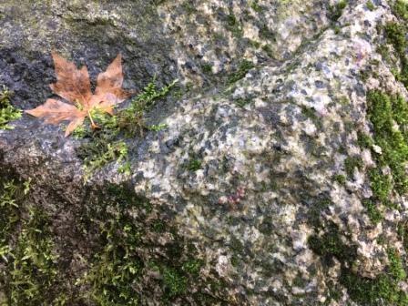 Moss on rock2.jpg