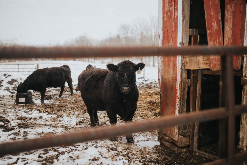 civington-ohio-farm-engagement-session-11.jpg