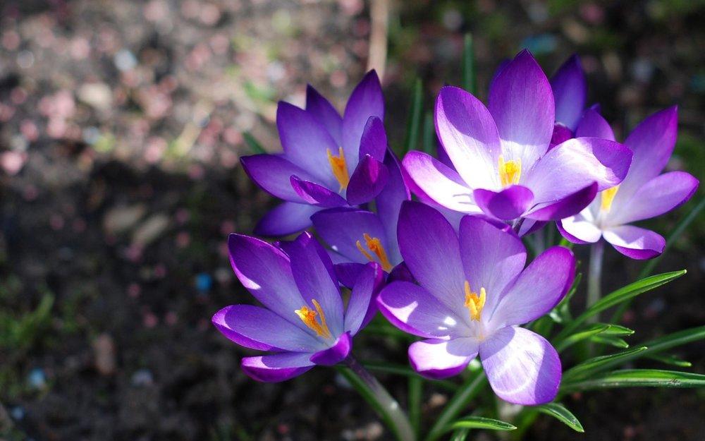 flowers purple and white.jpg