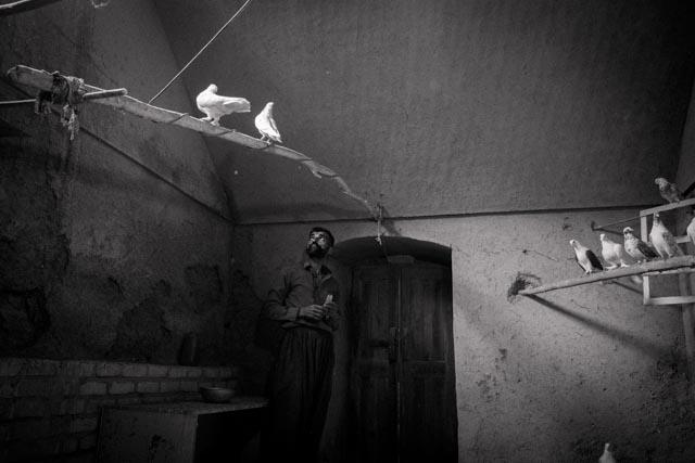 samuelwooten_DSCF5158_pigeonbreeder