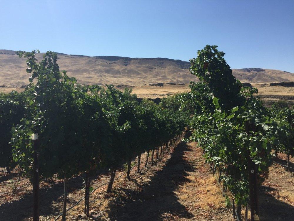 Roth Rock Vines
