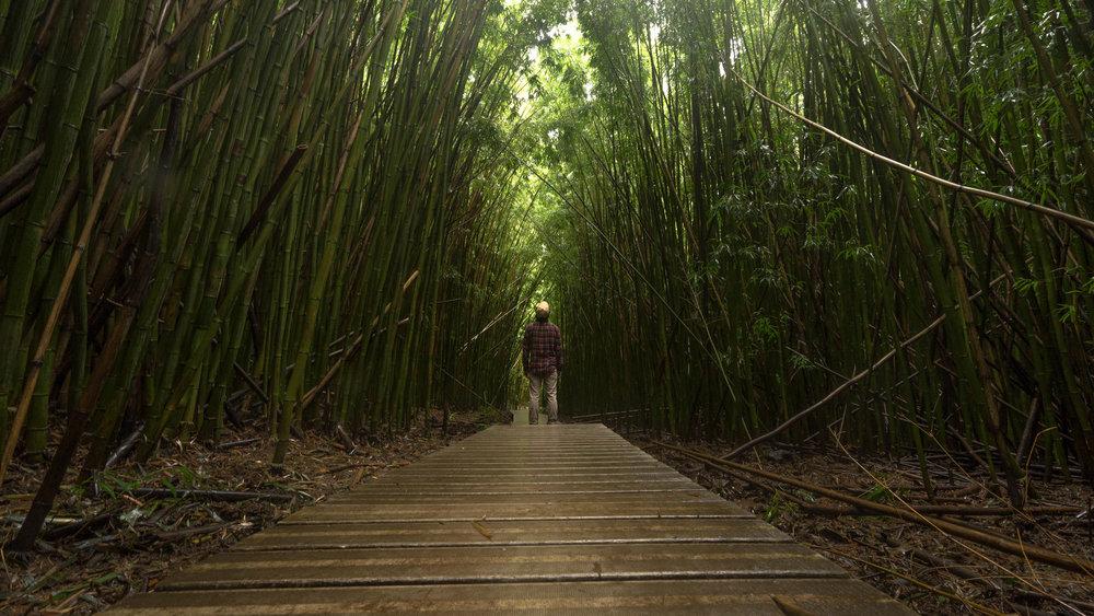 Pipiwai Trail, Maui