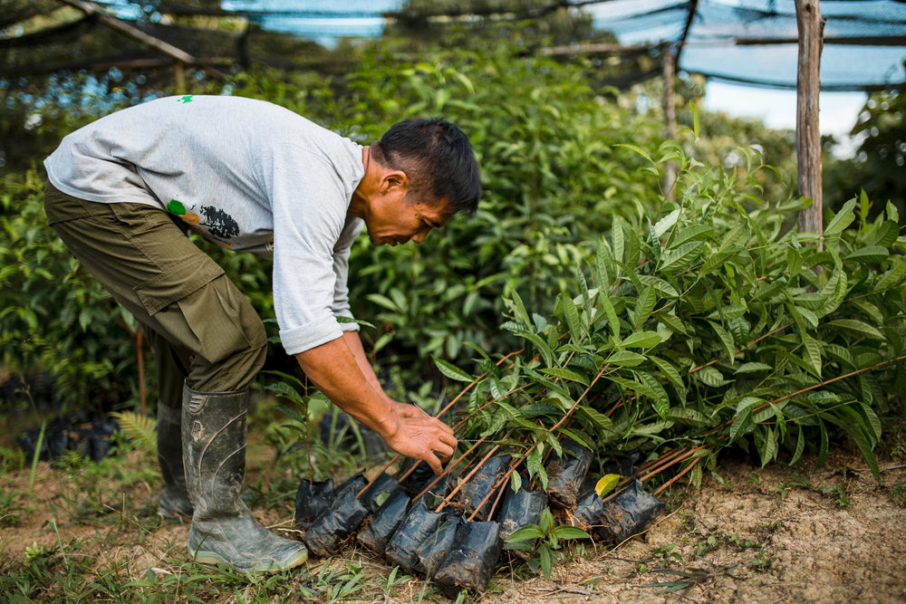 OIC staff member Bardock preps saplings for planting in a reforestation site.