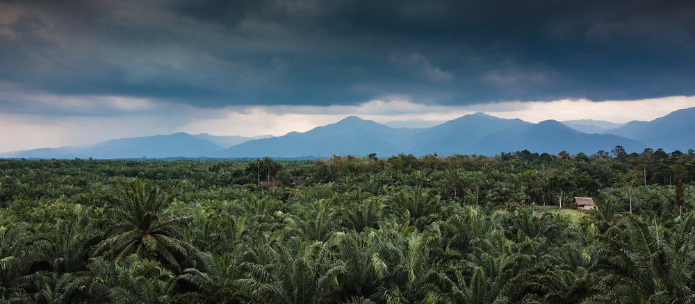 Much of the Sumatra looks like the image above. Oil palm plantations blanket the landscape, sometimes as far as the eye can see.