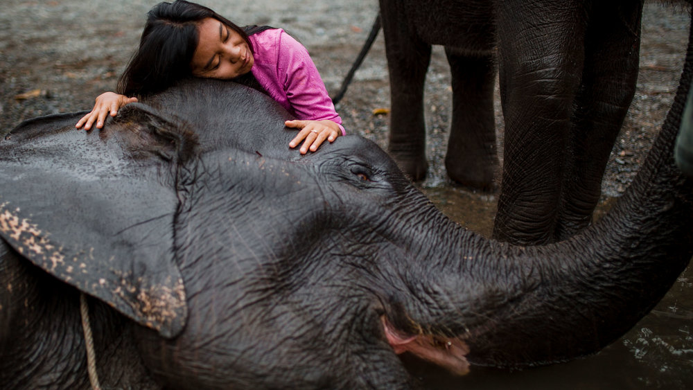 Nayla, an OIC staff member, hugging an adult female Sumatran elephant during it's daily bath at a protected sanctuary.