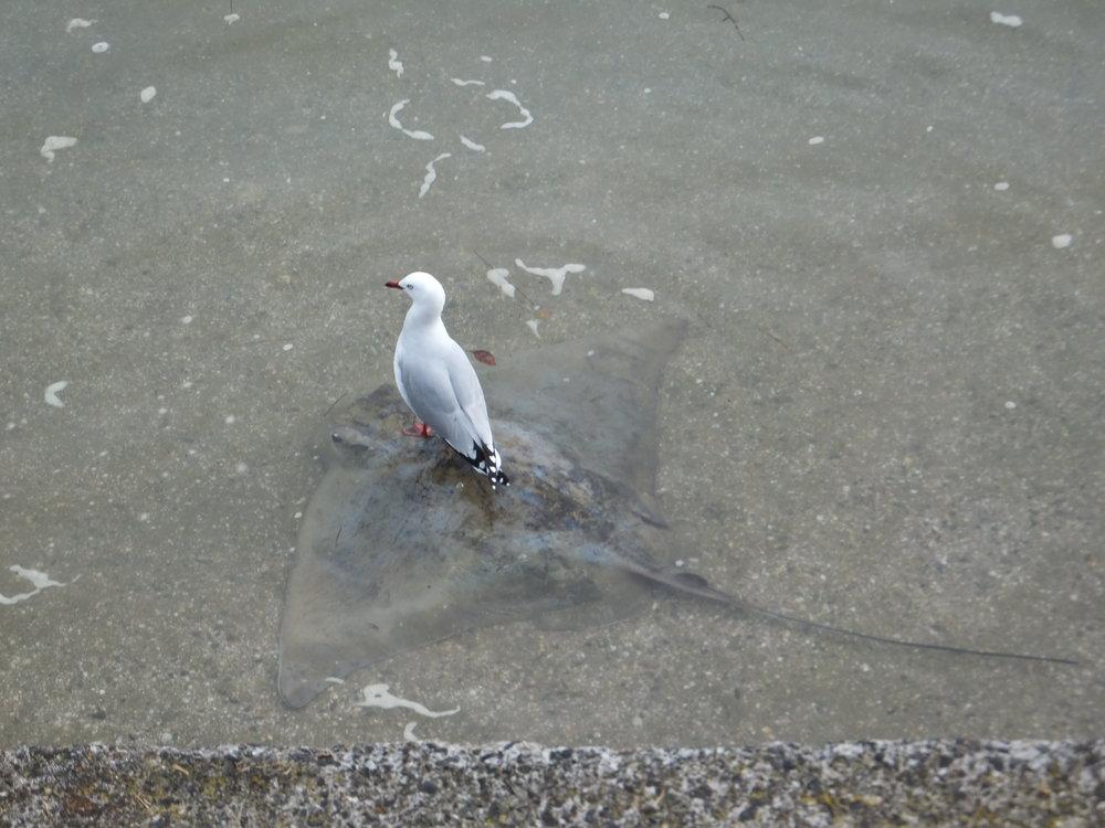 Birds_032.JPG