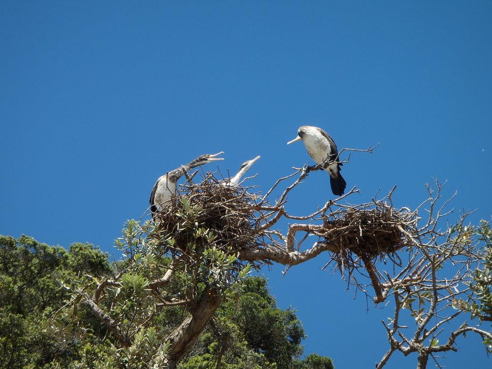 Birds_049.JPG