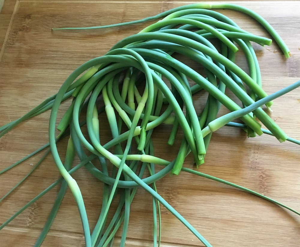 Garlic scapes, the flower heads from hardneck garlic