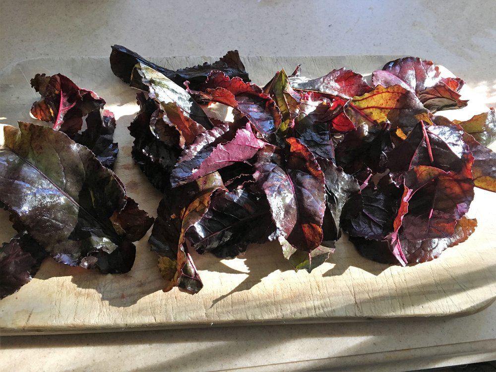 These beet greens have been kissed by frost and turned red. Serve them with green Swiss chard and roasted beets drizzled with goat cheese sauce.