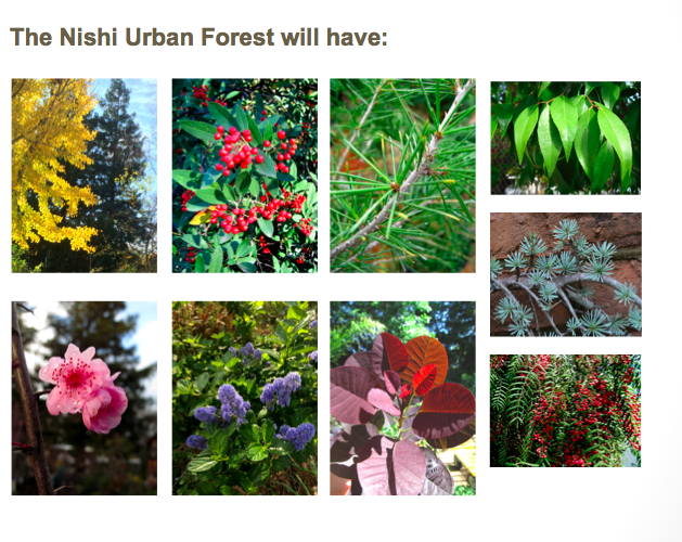 Urban Forest Buffer designed by Don Shor -