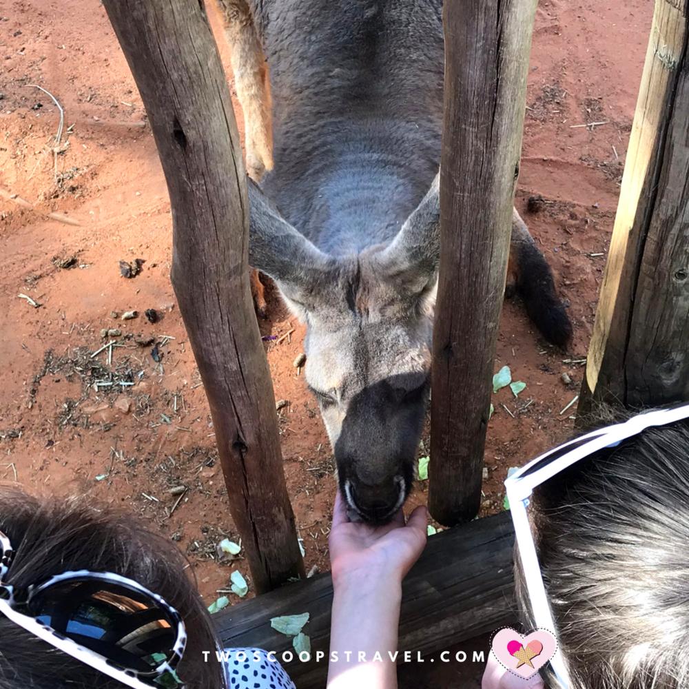 Busch Gardens' Kangaroo Experience at Walkabout Way