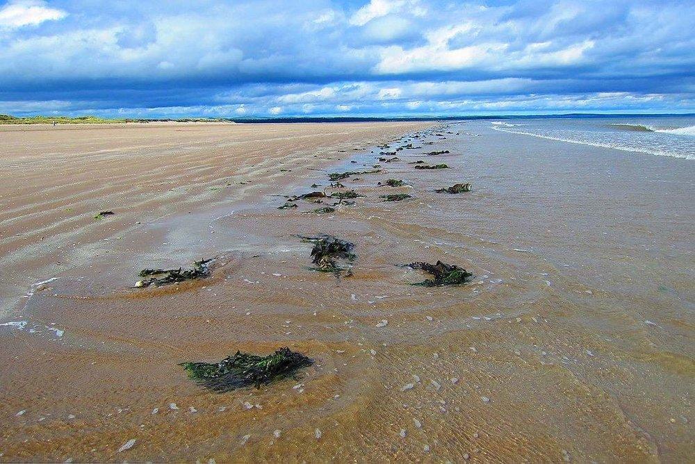 ST. ANDREWS WEST SANDS BEACH