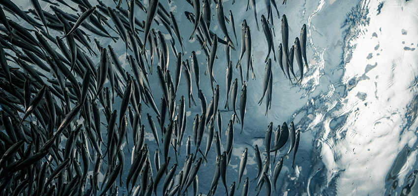 fish-school.jpg