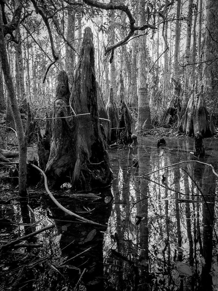 Disney Wildernes Preserve
