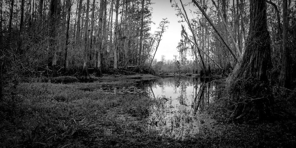 Shingle Creek- Bibb Landing