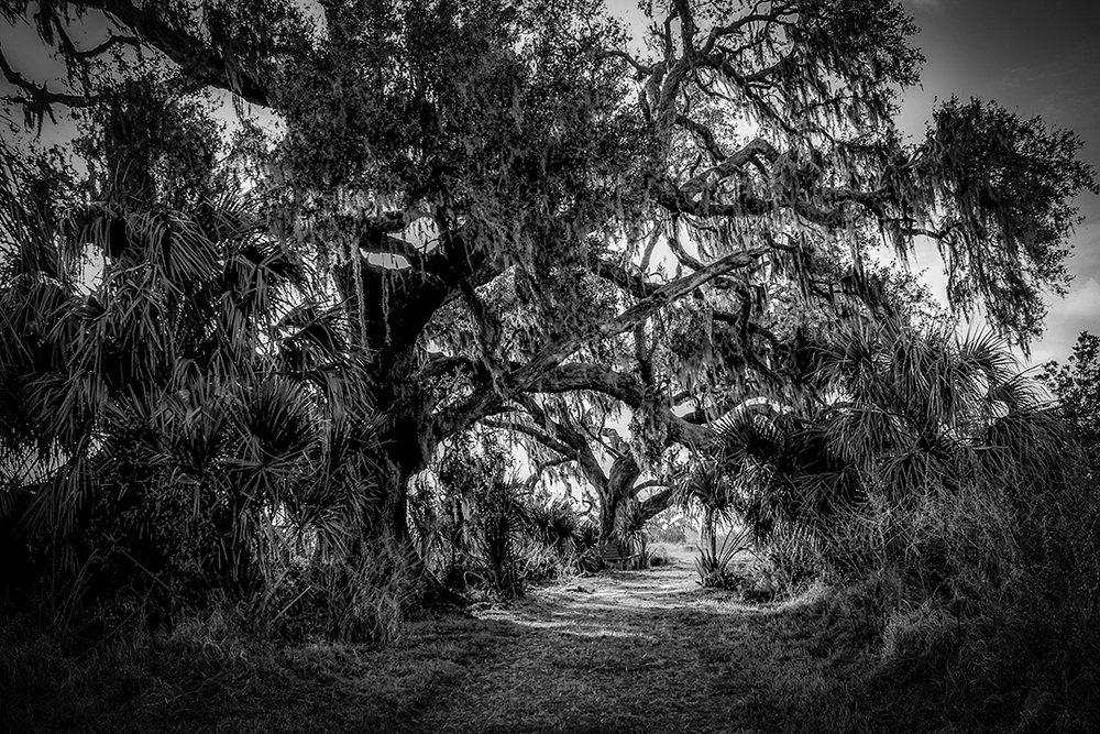 Twin Oaks Conservation Area