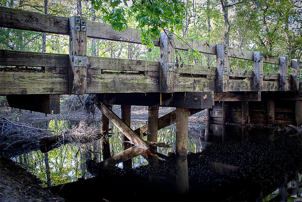 Econlockhatchee River- Hal Scott Regional Preserve