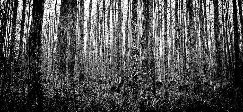 Split Oak Preserve