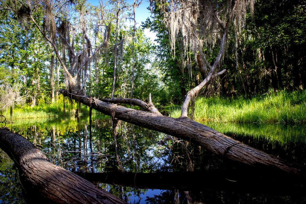 Single Creek Regional Park North