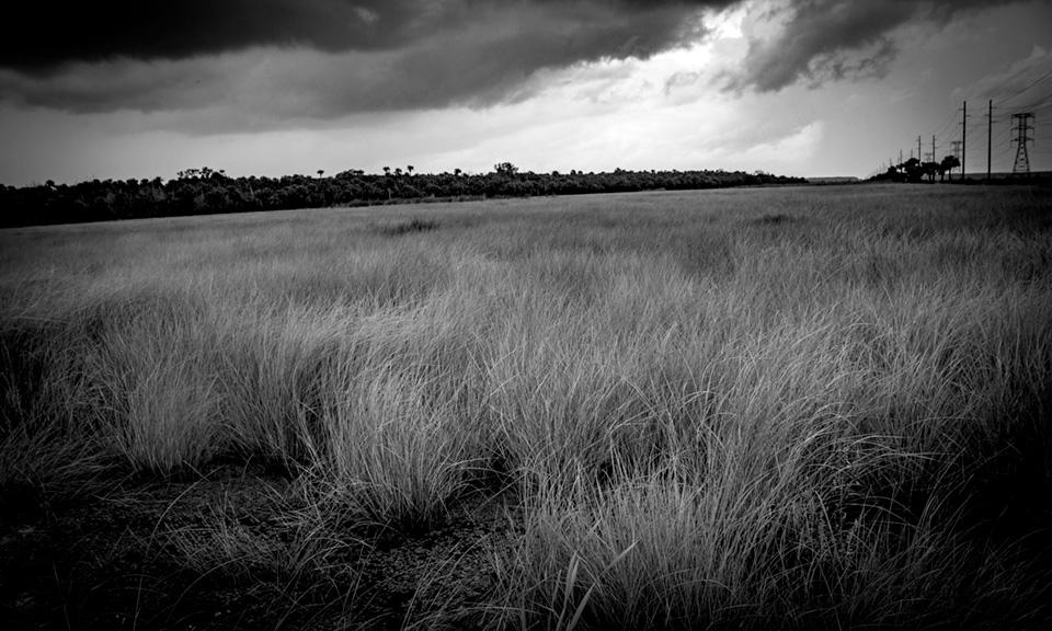 Tosohatchee Wildlife Management Area