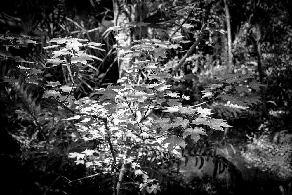 Black Hammock Wilderness Area