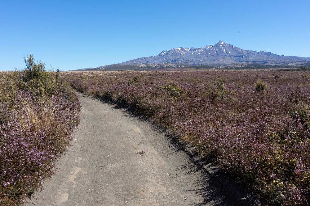 Mt. Ruapehu, the southernmost volcano in the Taupo Volcanic Zone