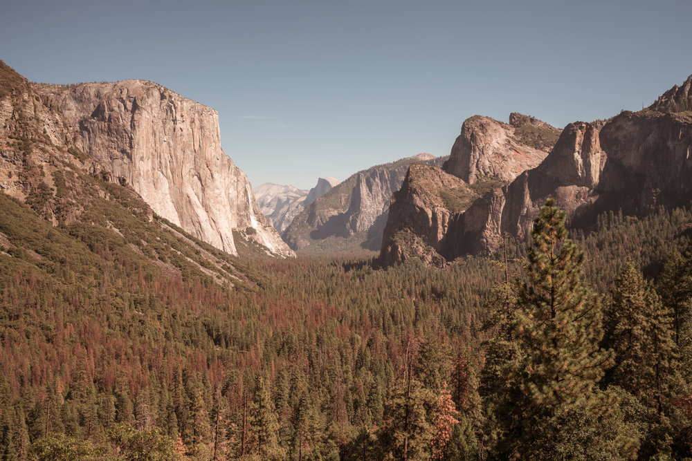 YOSEMITE, CALIFORONIA