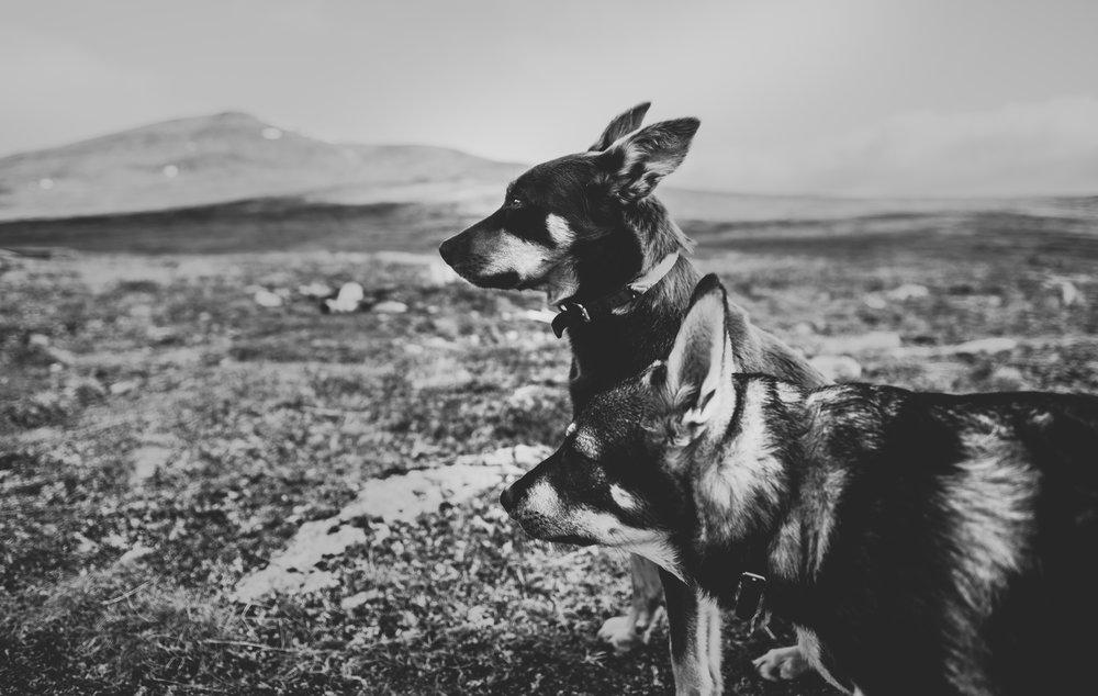 hund-1-2.jpg