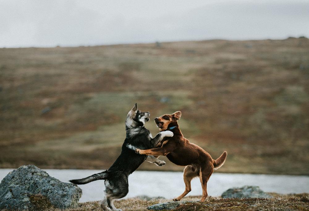 hund-1.jpg
