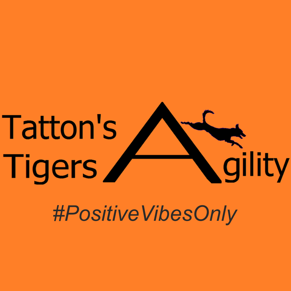 Tatton's Tigers Agility