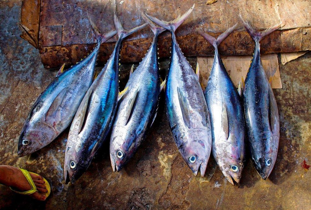 tuna-fish.jpg