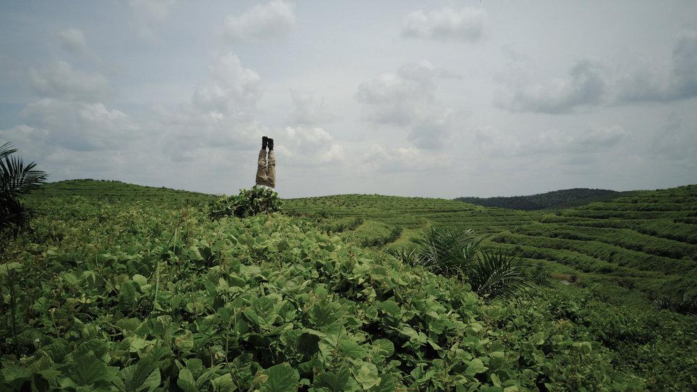 Mark Jenkins Plantation North Sumatra Phtoo Credit Tan Wei Ming.jpg