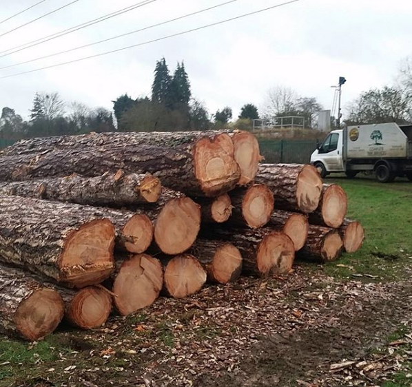 Timber extraction.